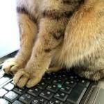 ペットのことをよく考えてみた結果、己の器の小ささを改めて思い知る